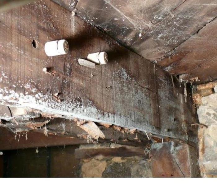 Mold Remediation Microbial Growth / Mold